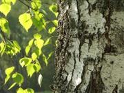Обрезка плодовых деревьев,  расчистка и благоустройство участков