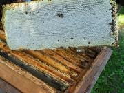 Продам мёд,  прополис и продукты пчеловодства.